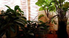 Как выращивать домашние растения