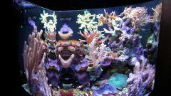 Как оформить аквариум без рыбок