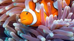 Как узнать возраст рыбы