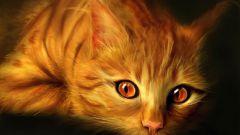 Почему кошки урчат