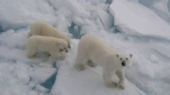 Как попасть в Арктику