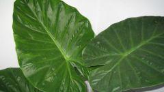 Почему растения зеленые