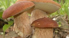 Как собирать осенние грибы