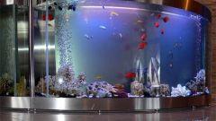 Как выполнить оформление аквариума
