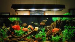Как выбрать лампу для домашнего аквариума