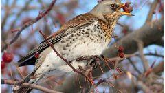 Почему гибнут птицы