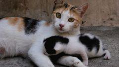 Что делать, если кошка сама не может родить