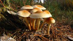 Почему нельзя собирать грибы
