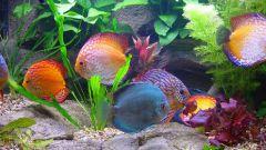 Что делать, если вода в аквариуме мутная