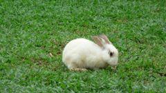Почему кролики кусаются