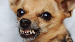 Что делать, если покусала собака