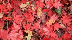 Как сделать поделку из осенних листьев