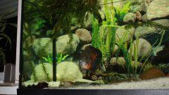 Как сделать аквариумное хозяйство