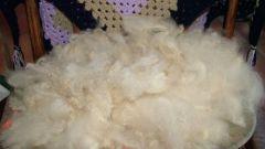 Как определить качество шерсти