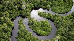 Как проявляется воздействие экологических факторов