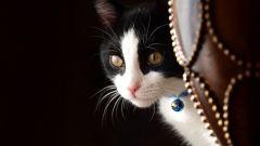 Что делать, если кошка просит кота