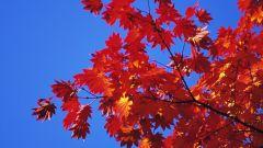 Почему краснеют листья