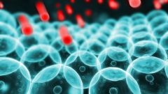 Что такое цитоплазма