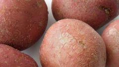 Как заработать на картошке