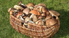 Как обрабатывать грибы