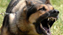 Как защититься от нападения собак