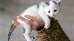 Как измерить температуру котенку