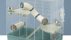 Как обустроить клетку для крыс