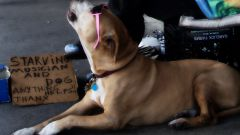 Как научить собаку петь