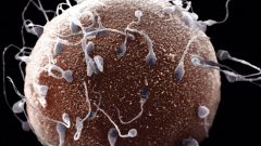 Как определить бесплодие у мужчины