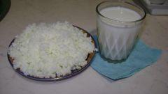 How to keep the Tibetan milk mushroom