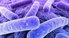 Почему бактерии считаются наиболее древними организмами