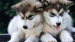 Как назвать маленького щенка