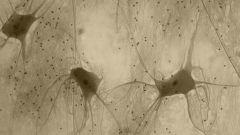 Что такое нервная ткань