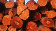 Как заготавливать древесину