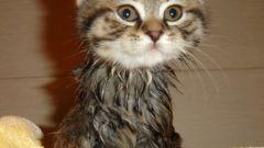 Как мыть маленького котенка