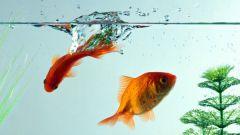 Что нужно для аквариума