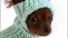 How to knit a hat dog