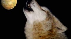 Почему собаки воют