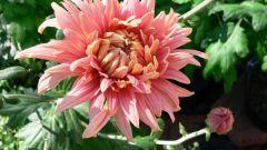 Как делать украшения из цветов