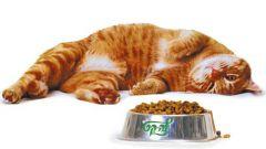 Как выбрать кошачий корм