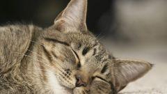 Как отбить запах кошачей мочи