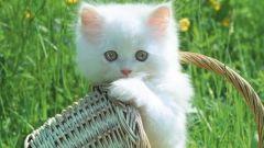 Как удалять клещей у котят