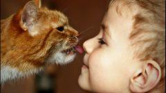 Как расположить к себе кошку