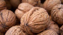 Как прорастить грецкий орех