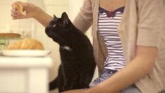 Как кормить домашних кошек