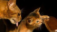 Какие прививки нужно делать кошкам
