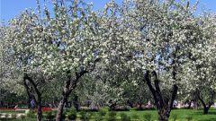 Как вырастить дерево из семечки