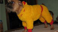 Как связать одежду для собаки