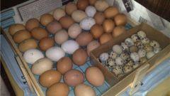 Как сделать домашний инкубатор для яиц