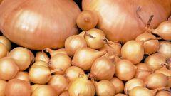 Как вырастить лук севок